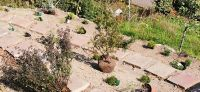 20200920_Bepflanzung_Kraeutergarten_03