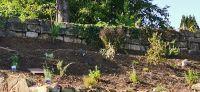 20200920_Bepflanzung_Kraeutergarten_05