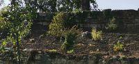 20200920_Bepflanzung_Kraeutergarten_06