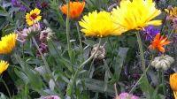 wildblumenbeet_01