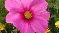 wildblumenbeet_02