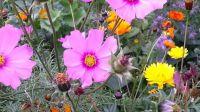 wildblumenbeet_03
