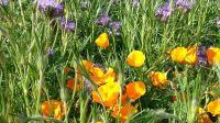 wildblumenbeet_05