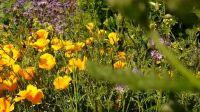 wildblumenbeet_08